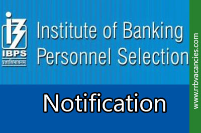 IBPS RRB Notification